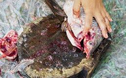 Pescados de la Tilapia de la carne del corte para cocinar foto de archivo