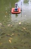 Pescados de la Tilapia en granja Fotos de archivo