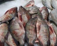 Pescados de la Tilapia en una parada del mercado imagen de archivo libre de regalías