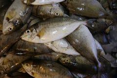 Pescados de las bremas de la Cerda-cabeza del mercado de pescados Imágenes de archivo libres de regalías