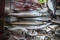 Pescados de las bremas de la Cerda-cabeza del mercado de pescados Foto de archivo