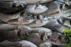 Pescados de las bremas de la Cerda-cabeza del mercado de pescados Imagen de archivo