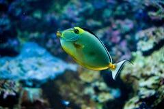 Pescados de las zonas tropicales Imagenes de archivo