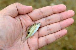 Pescados de Live Small en mano de protección Imágenes de archivo libres de regalías