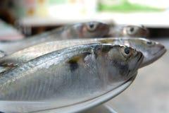 Pescados de los mariscos Foto de archivo libre de regalías