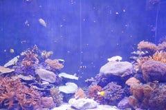 Pescados de mar imagenes de archivo