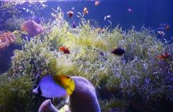 Pescados de mar Fotografía de archivo libre de regalías