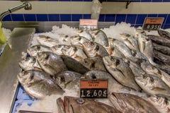 Pescados de mar en el mercado de pescados Fotos de archivo libres de regalías