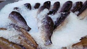 Pescados de mar frescos colocados en el hielo en el mercado metrajes