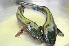 Pescados de mar frescos, el mercado de pescados Foto de archivo libre de regalías