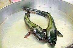 Pescados de mar frescos, el mercado de pescados Imágenes de archivo libres de regalías