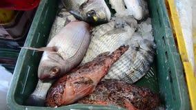 Pescados de mar frescos en el hielo en venta en mercado Mariscos Pescadero que vende pescados y los mariscos El pescadero vendió  almacen de video