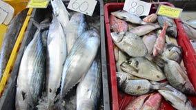 Pescados de mar frescos en el hielo en venta en mercado Mariscos Pescadero que vende pescados y los mariscos El pescadero vendió  metrajes