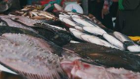 Pescados de mar frescos en el mercado contrario almacen de video