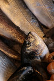 Pescados de mar frescos para la venta Fotografía de archivo libre de regalías