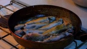 Pescados de mar fritos cacerola almacen de metraje de vídeo