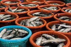 Pescados de mar grandes de la pila en cesta Fotos de archivo