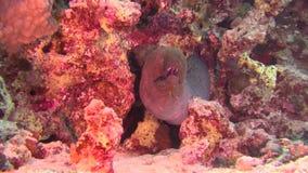 Pescados de mar Opinión del mar Vídeo subacuático Agua El zambullirse bajo el agua