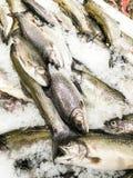 Pescados de mar para la venta en mercado de pescados Imágenes de archivo libres de regalías