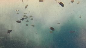 Pescados de mar tropicales multicolores que nadan en una acumulación grande de burbujas de oxígeno-gas disueltas en agua Puede se metrajes