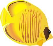 Pescados de mariposa stock de ilustración