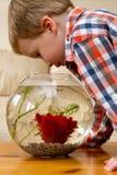 Pescados de observación del muchacho en tazón de fuente Fotografía de archivo