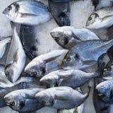 Pescados de plata de la brema de mar Fotografía de archivo