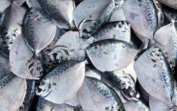 Pescados de plata de la talla media que mienten en el contador Fotos de archivo libres de regalías