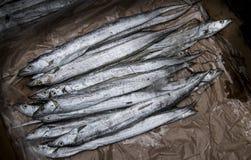 Pescados de plata largos Imagenes de archivo
