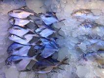 Pescados de Pomfert mantenidos hielo Fotografía de archivo
