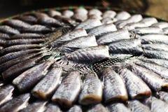 Pescados de Salid Imagenes de archivo