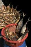 Pescados de sequía Fotos de archivo libres de regalías