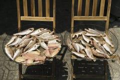 Pescados de sequía en el sol tropical Foto de archivo