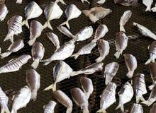 Pescados de sequía en red Imagen de archivo libre de regalías