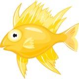 Pescados de Yellow Sea Imagen de archivo