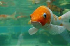 Pescados debajo del agua Foto de archivo libre de regalías