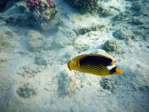 Pescados debajo del agua Imágenes de archivo libres de regalías