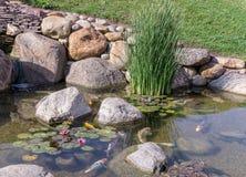 Pescados decorativos en la charca Foto de archivo