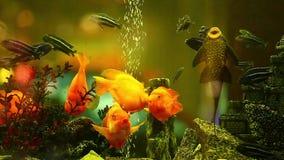 Pescados del acuario metrajes