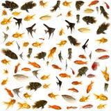 Pescados del acuario Imágenes de archivo libres de regalías