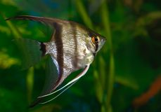 Pescados del acuario imagen de archivo