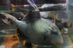 Pescados del acuario Imagenes de archivo