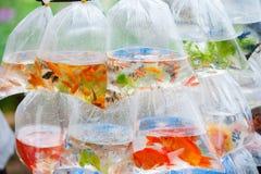 Pescados del acuario en las bolsas de plástico Fotografía de archivo