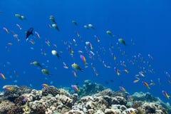 Pescados del arrecife de coral subacuáticos Imagenes de archivo