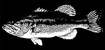 Pescados del bajo bocazas Imagenes de archivo