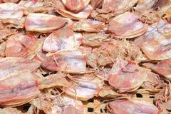 Pescados del calamar imagen de archivo libre de regalías