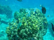 Pescados del Caribe Fotos de archivo