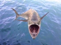 Pescados del cazador Foto de archivo libre de regalías