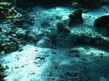 Pescados del cocodrilo Imagen de archivo libre de regalías