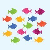 Pescados del color de Ternetzi Imágenes de archivo libres de regalías